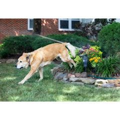 Solar Motion Activated Animal Deterrent