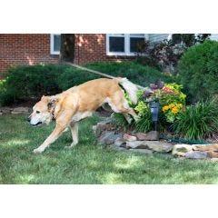 Solar Motion Activated Animal Deterrent